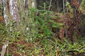 Dette vesle treet står heilt ubeskytta