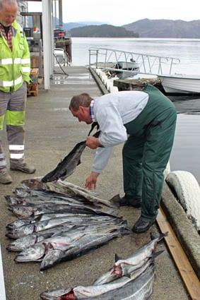 Fiskeskrytebilde